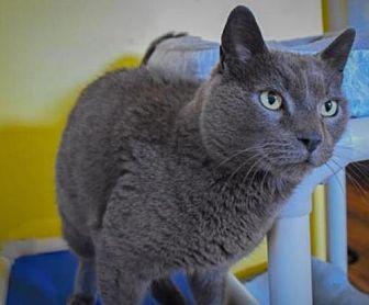 Adopt A Pet :: Storm  - Devon, PA