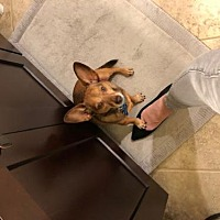 Adopt a pet near you | PetSmart Charities