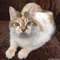 Adopt A Pet :: Edith - St Louis, MO