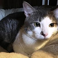 Adopt A Pet :: Parker - Chesterland, OH
