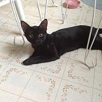Adopt A Pet :: Frankie - Hudson, NY