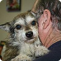 Adopt A Pet :: Scruffs - Brooksville, FL