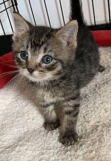 Adopt A Pet :: Henry  - Dumfries, VA
