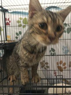 Adopt A Pet :: Duchess  - Floral City, FL