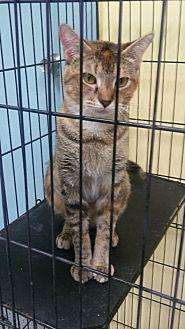 Adopt A Pet :: Ember  - Mt Vernon, IN