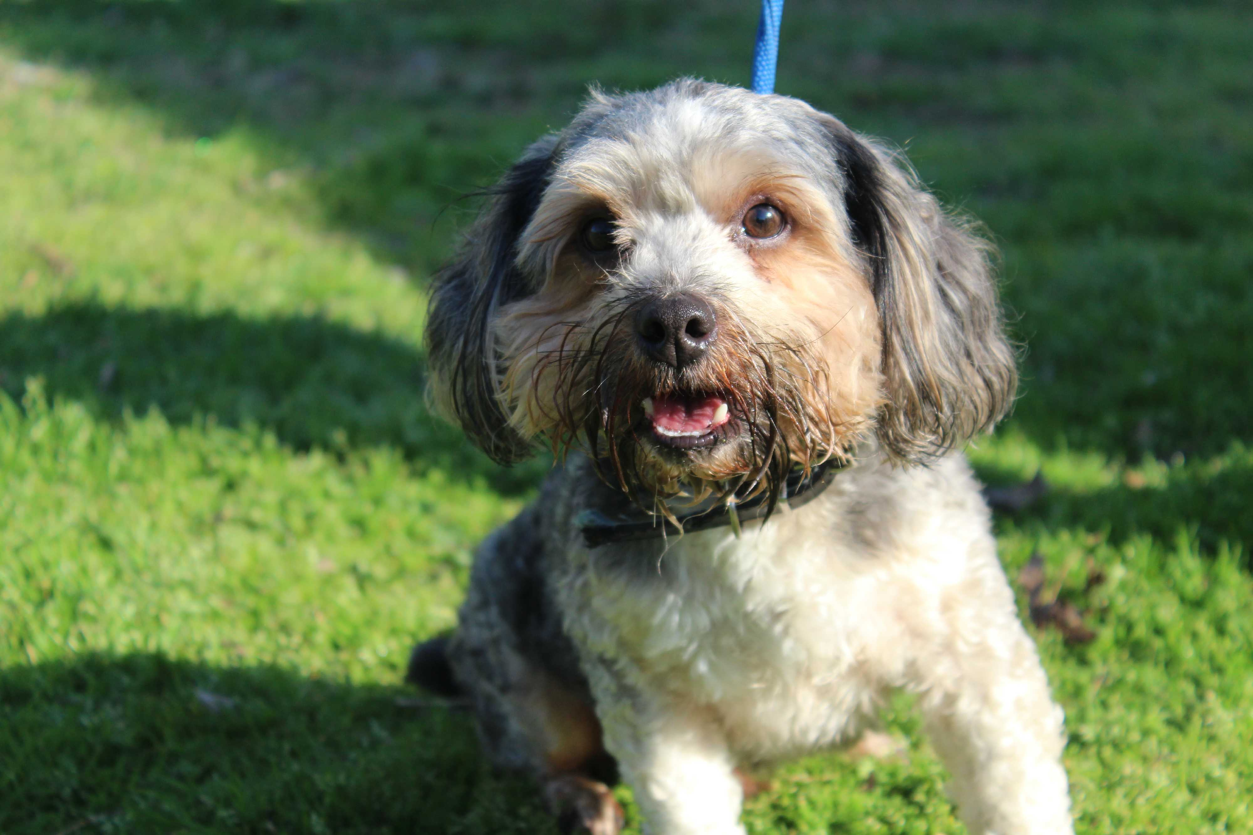 Conway Ar Yorkie Yorkshire Terrier Meet Mick A Pet For Adoption