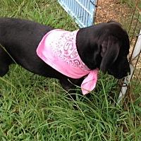 Adopt A Pet :: CARLEE - Marshfield, MA