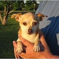 Adopt A Pet :: Tia - Greenville, RI