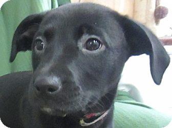 Labrador Retriever Mix Dog for adoption in Lloydminster, Alberta - Donna