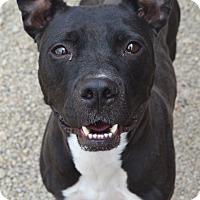 Adopt A Pet :: Paris - Toledo, OH
