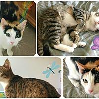 Adopt A Pet :: Eddie - Lancaster, CA