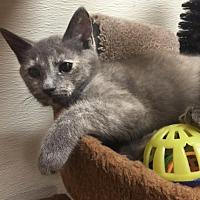 Adopt A Pet :: Rosemary - Chino Hills, CA