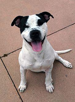 Adopt A Pet :: Sony  - Troy, MI