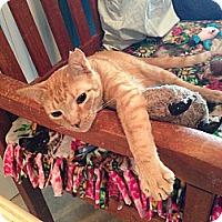 Adopt A Pet :: Ellie - Deerfield Beach, FL