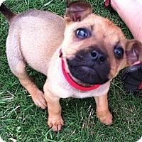Adopt A Pet :: Tyke - Starkville, MS