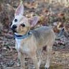 Adopt A Pet :: Benito