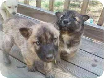 Meet Huskey Mix a Dog for Adoption.