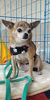 Adopt A Pet :: Princess  - Floral City, FL