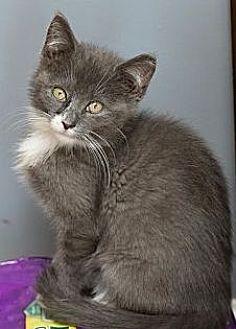 Adopt A Pet :: Leia  - Devon, PA