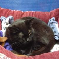 Adopt A Pet :: Madalyn - Erie, PA
