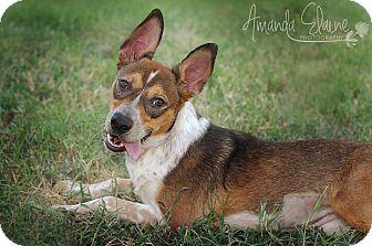 Australian Cattle Dog Mix Puppy for adoption in Pilot Point, Texas - VANESSA