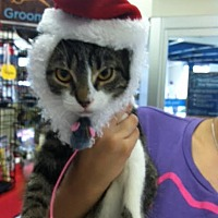 Adopt A Pet :: Baker - Miami, FL