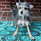 Adopt A Pet :: Etsy