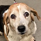 Adopt A Pet :: Fannie *Adopt or Foster*