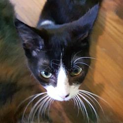 Kittens For Sale In Nashville Tennessee Adoptapet Com