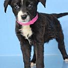 Adopt A Pet :: Dani