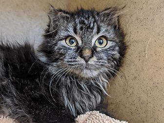 Adopt A Pet :: 19-0822  - Laramie, WY