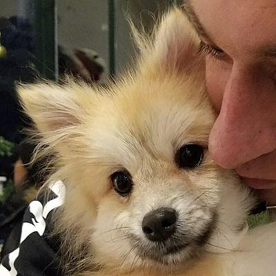 LONG ISLAND CITY, NY - Pomeranian  Meet Josh a Pet for Adoption