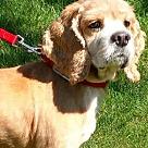 Adopt A Pet :: Chancey