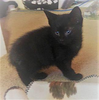 Adopt A Pet :: Cosmo  - Dumfries, VA