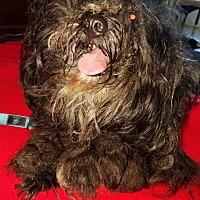Adopt A Pet :: Sparkey - Freeport, NY