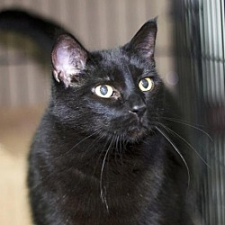 Kittens for Sale in South Dakota - Adoptapet com