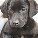 Adopt A Pet :: Callista Moon