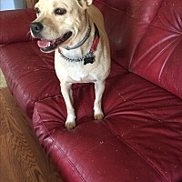 Adopt A Pet :: Sugar - Goldsboro, NC