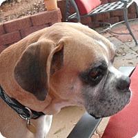 Adopt A Pet :: Rocco - Hudson, NH