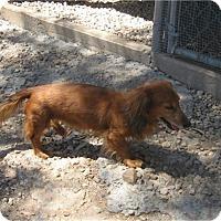 Adopt A Pet :: Rowan - Tucson, AZ