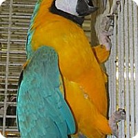 Adopt A Pet :: Paco - Edgerton, WI