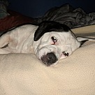 Adopt A Pet :: Starbrite