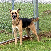 Adopt A Pet :: INGRID-FOSTER NEEDED - Hagerstown, MD