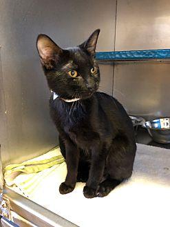 Adopt A Pet :: Irena  - Moose Jaw, SK