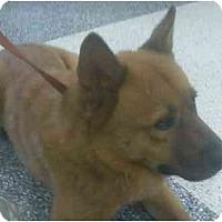 Adopt A Pet :: Bubba - Riverside, CA
