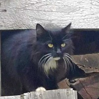 Adopt A Pet :: Myhsa - Putnam, CT