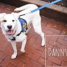 Adopt A Pet :: Danny (Has Application)