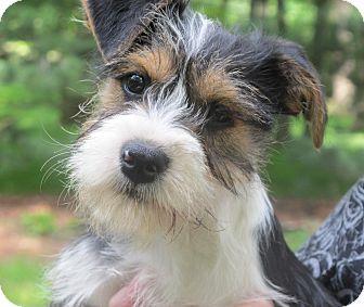 Small Dog Adoption Washington Dc