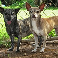 Adopt A Pet :: KAYCE - Lincolndale, NY