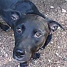 Adopt A Pet :: Peter Crow